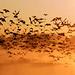 Birds of Rocky Mountain Arsenal National Wildlife Refuge