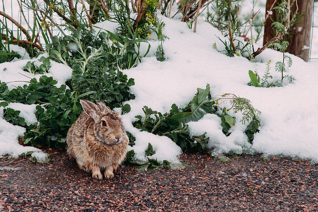 Cold Bunny