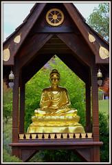 meditating gold buddha statue