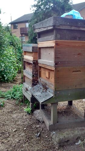 hive June 14 2