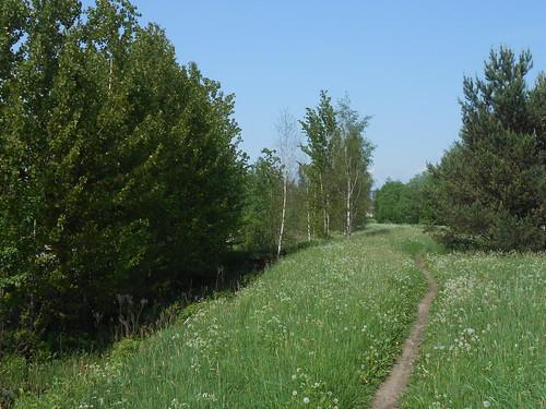 Niittynäkymä, Pohjois-Tapiola Espoo 4.6.2014