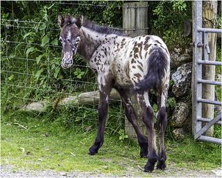 Dartmoor baby