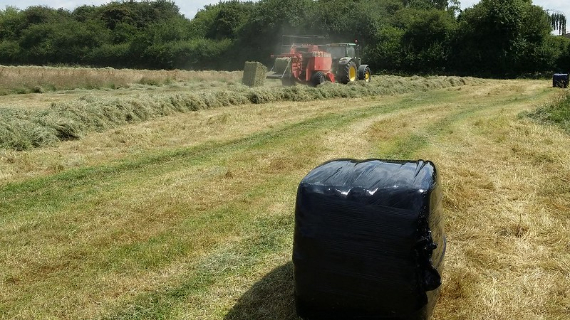 Make hay while the sun shines #LondonLOOP #sh