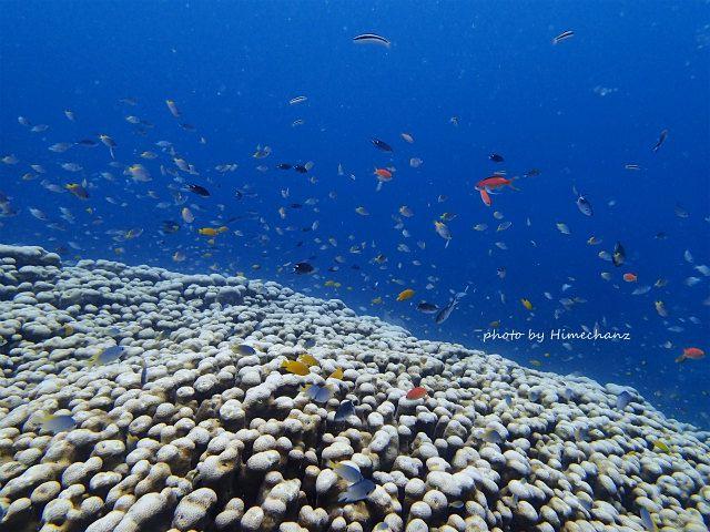 サンゴの上には沢山の熱帯魚w