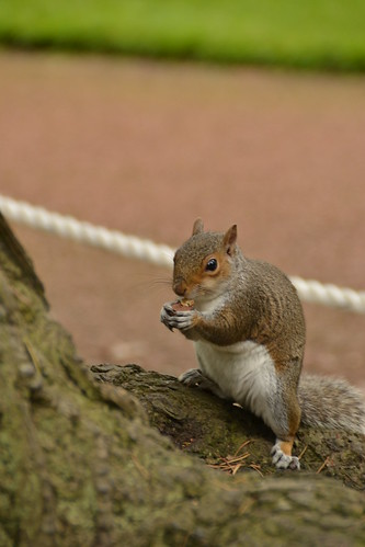 458 - Edinburgh - botanic gardens - Squirrel