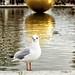 Seagull : jardin des tuileries in Paris by jmlpyt
