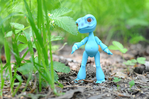 Froggy in the forest