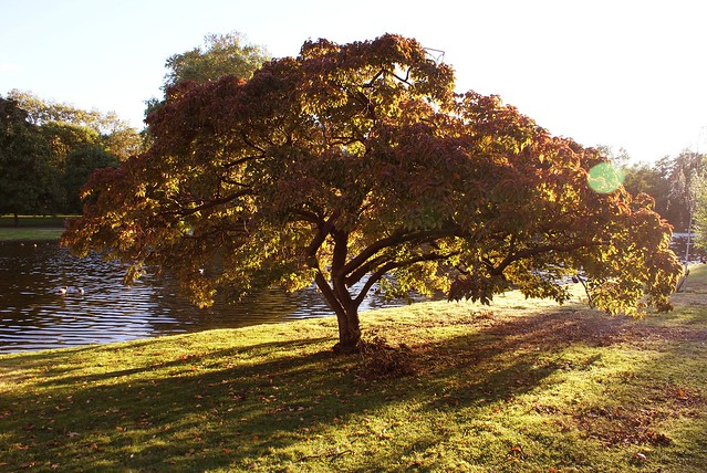 > Parc Saint James à Londres à l'automne.