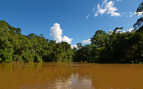 ecuador amazon rainforest yasuni yasuninationalpark riotiputini andreaskay