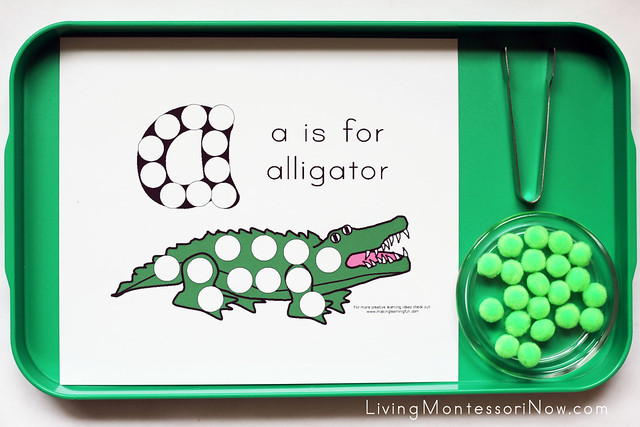 A is for Alligator Tray
