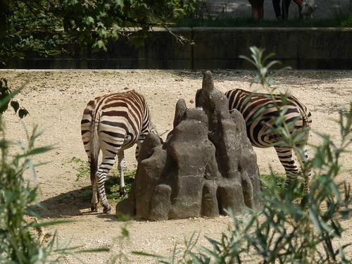 Zoo Zürich 31-7-2014