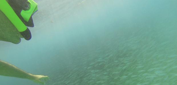 Aruba Atividades