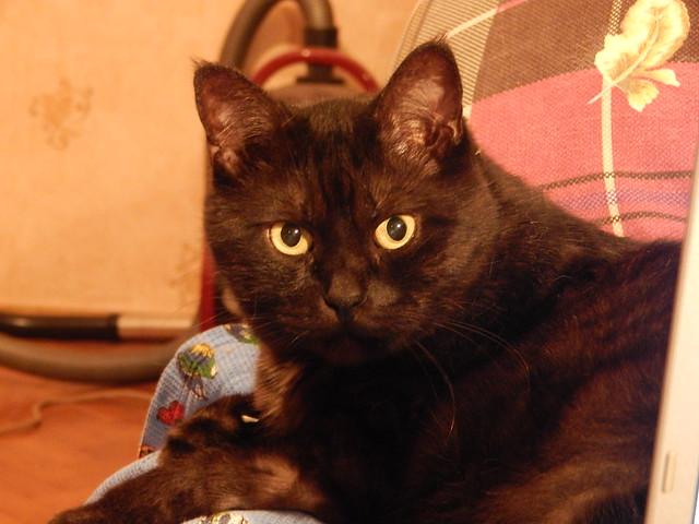 кот Муся смотрит