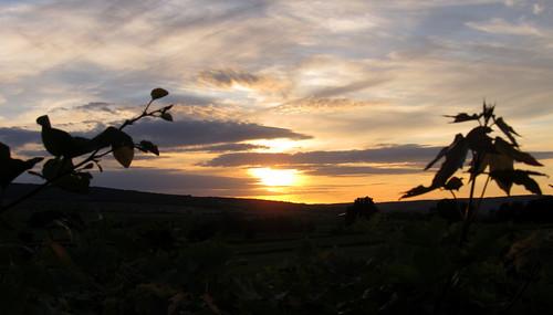 sunset sky cloud sun berg leaf sonnenuntergang god milano hill himmel wolke tent blatt sonne bourgogne zelt taizé gott burgund ambrosius