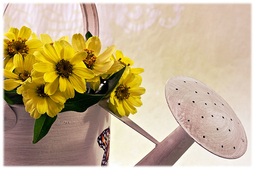 Large Petalled Daisies In Watering Can