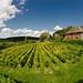 Vignoble de Gerberoy ©zigazou76