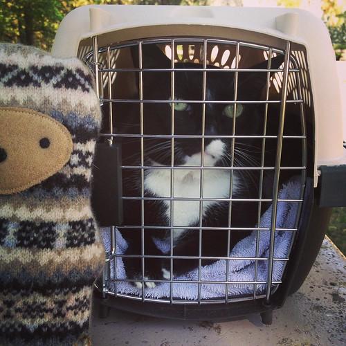 rest stop cat
