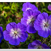 Flower by Apestar68
