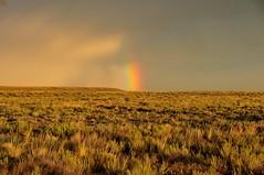 Sagebrush Rainbow Seedskadee NWR 04