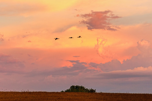 wisconsin clouds sunrise unitedstates crane leeds sandhill ©jrj