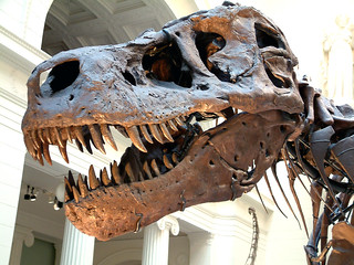 Tyrannosaurus rex theropod dinosaur (Hell Creek Formation, Upper Cretaceous; near Faith, northwestern South Dakota, USA) 2