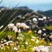 Upper Sonoran Flora