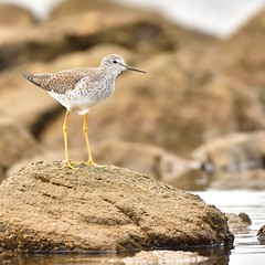 Uruguay aves