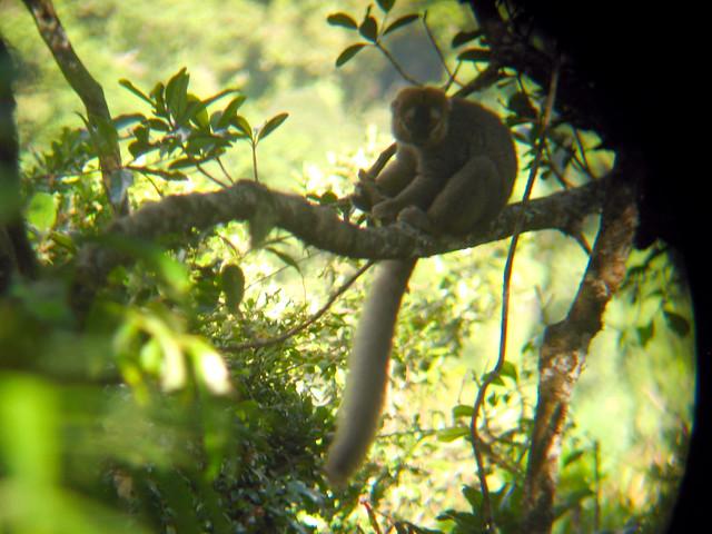 Madagascar2 - 036