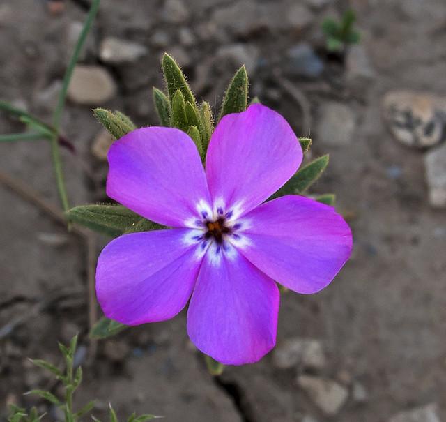 Wildflower3_1108