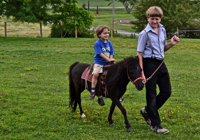 miniature horse ride - Amish Village Lancaster County PA