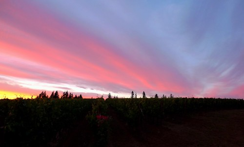sunset sky skyscape landscape vineyard willamettevalley