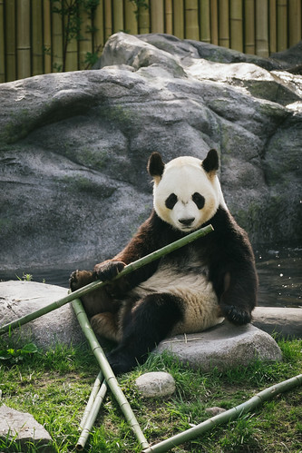 Playing with Bamboo
