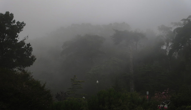 Foggy Golden Gate Park (2014)