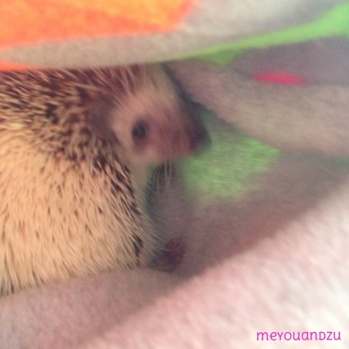 Snuggly hedgie