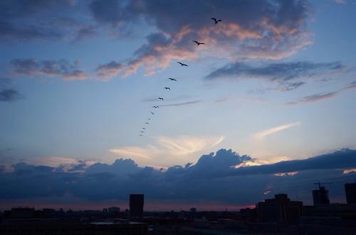 sunset sky cloud chicago bird seagull motionshot posslowresfail