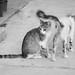 gatos by Natinik