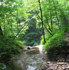 nature reserve, stream, woodland, trail, rainforest, leaf, tree, river, riparian forest, old-growth forest, creek, forest, natural environment, ravine, wilderness, state park, jungle, biome, vegetation, temperate broadleaf and mixed forest,