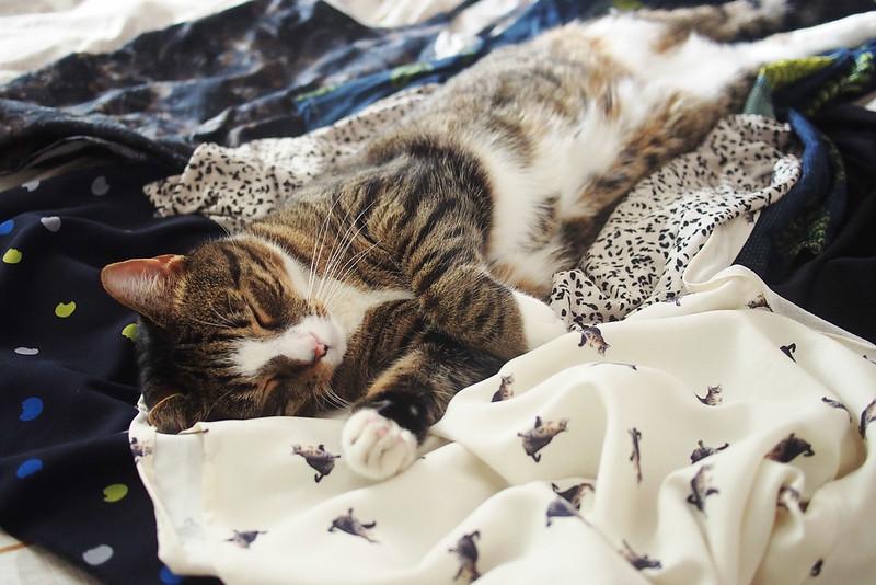 Fabric cat