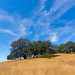 Trees at Tolay Lake Regional Park by harminder dhesi photography