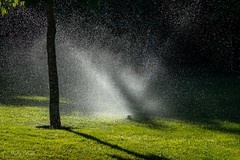 Watering the lawn 3