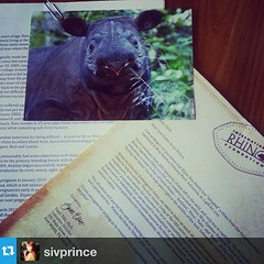 This came in the mail today. Someone bought us a #rhino! #truestory #adoptarhino#raturhino #Repost from @sivprince