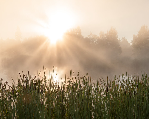 morning sun mist lake washington pond nikon state pacific northwest beam d300 18200vrii
