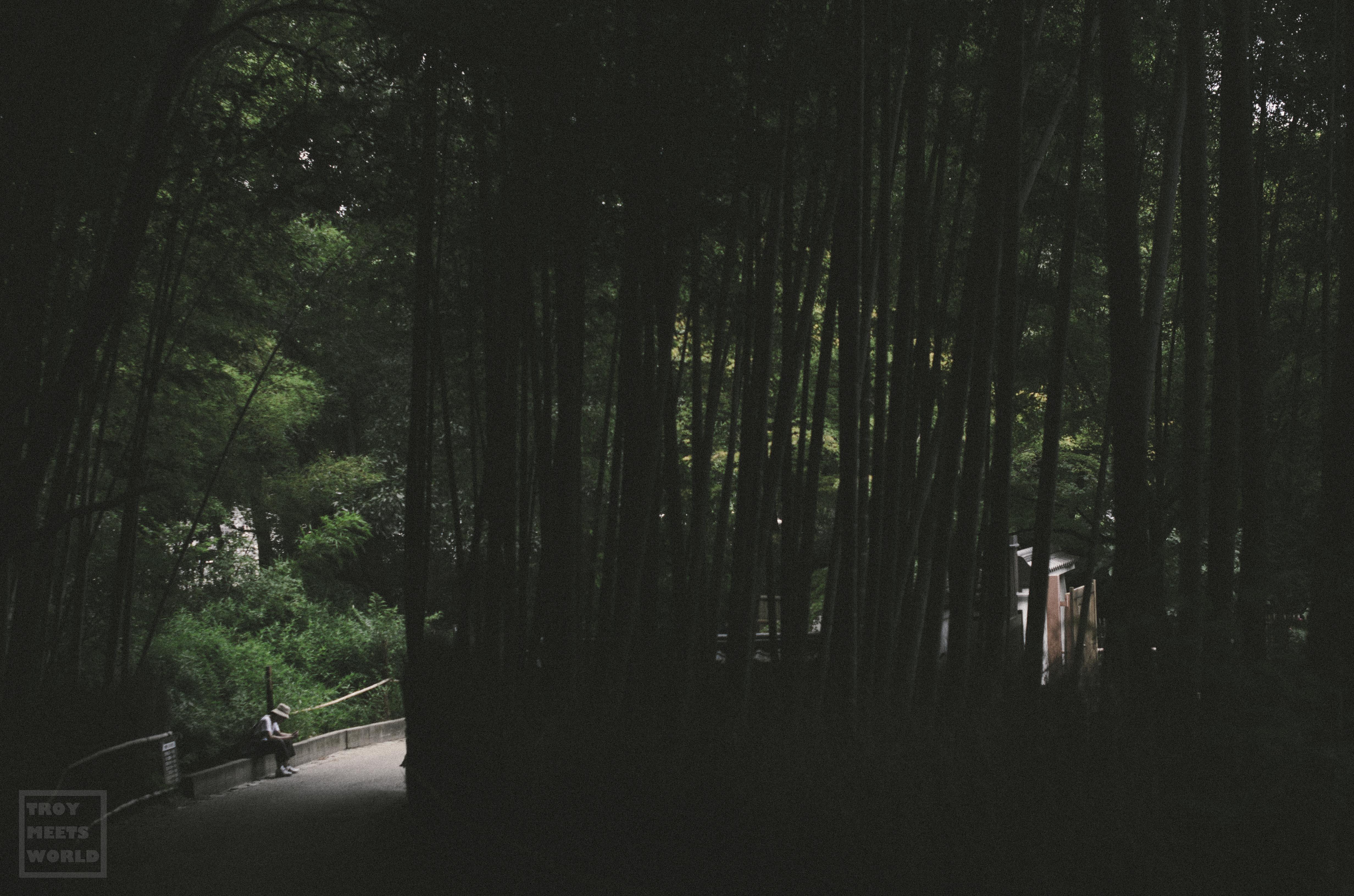 Arashiyama-2