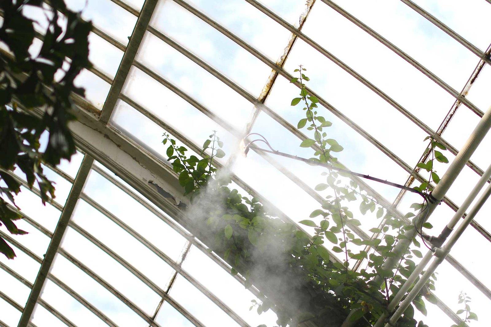 plant-spritzer-in-kew-gardens-greenhouse