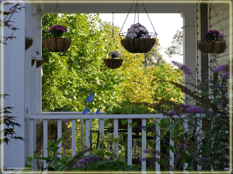 ~ morning view of the porch -- late summer...