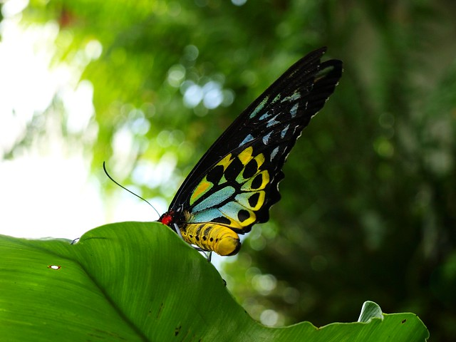 butterfly conservatory at niagara falls on flickr. Black Bedroom Furniture Sets. Home Design Ideas