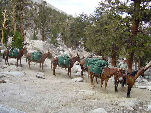 Mule packer Lee Roeser leads a pack through Guyute Pass in Sequoia National Park. (National Park Service/ Greg Fauth)