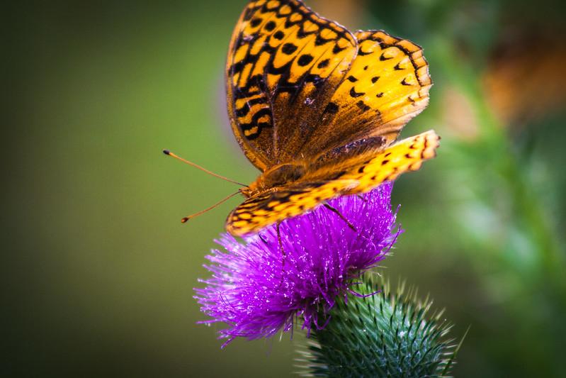 butterflytwo