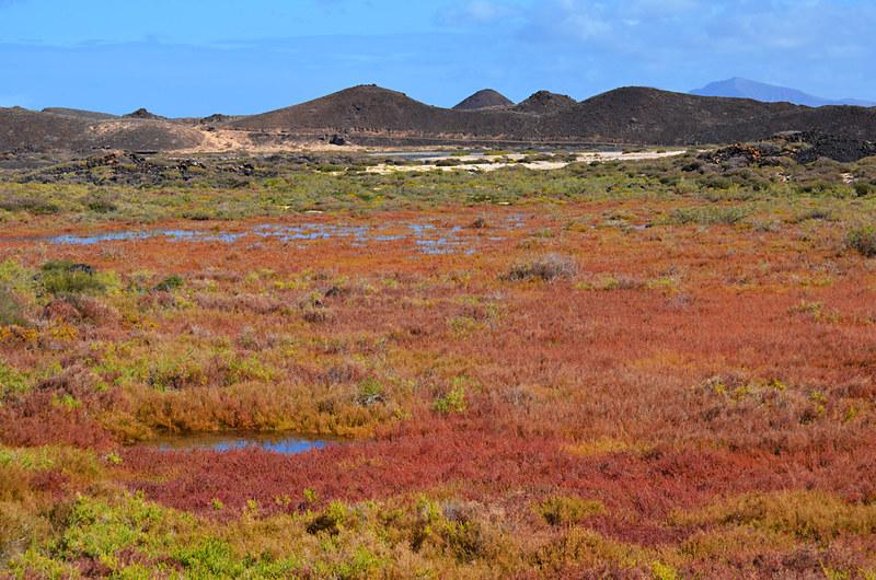 Saltmarshes, Isla de Lobos, Fuerteventura
