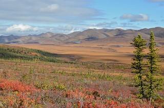 Fall Colors at the Arctic Circle